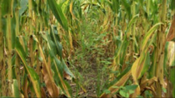 Chris Burgess: SA boere staan uit in VSA