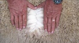 URGENT NOTICE: SOUTH AFRICAN WOOL & MOHAIR BUYERS' ASSOCIATION NPC and WOOL & MOHAIR EXCHANGE OF SA