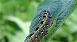 Lepidoptera Alert