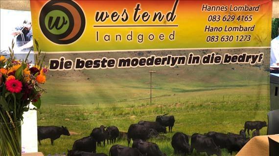 Westend Landgoed 12de Produksieveiling