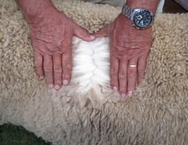 In die Suid Afrikaanse landbousektor maak wol 4% van landbou-uitvoerprodukte uit.